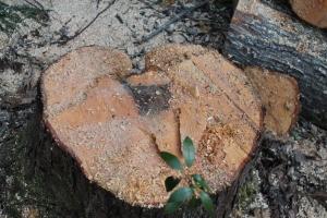 Heart of Tree