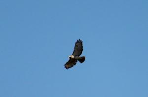 Hawk, show me my path