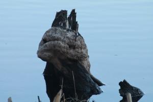 A Beautiful Grump-Stump