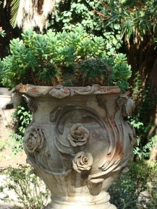 An Italian urn with succulents