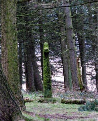 stone-in-the-wood.jpg