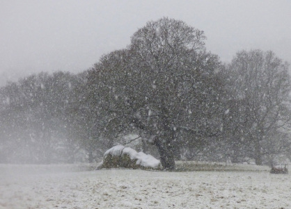 chatsworth-snow-11.jpg