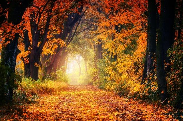 autumn-3186876_1280.jpg