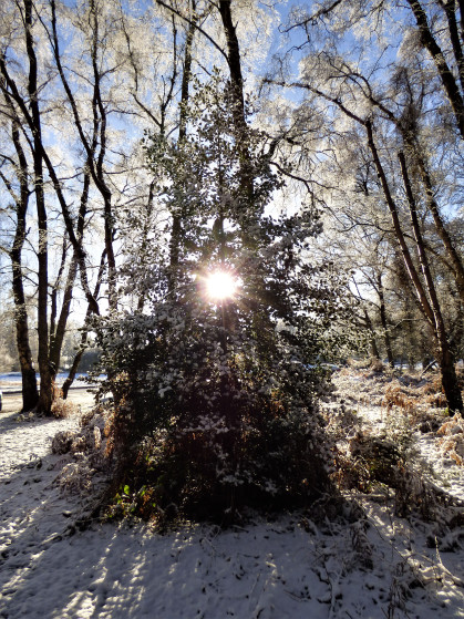 snowy-dawn-ivinhoe-and-ashridge-111.jpg