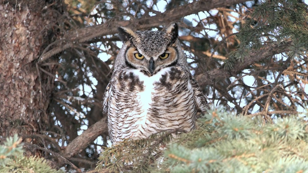 owl-4010227_1920