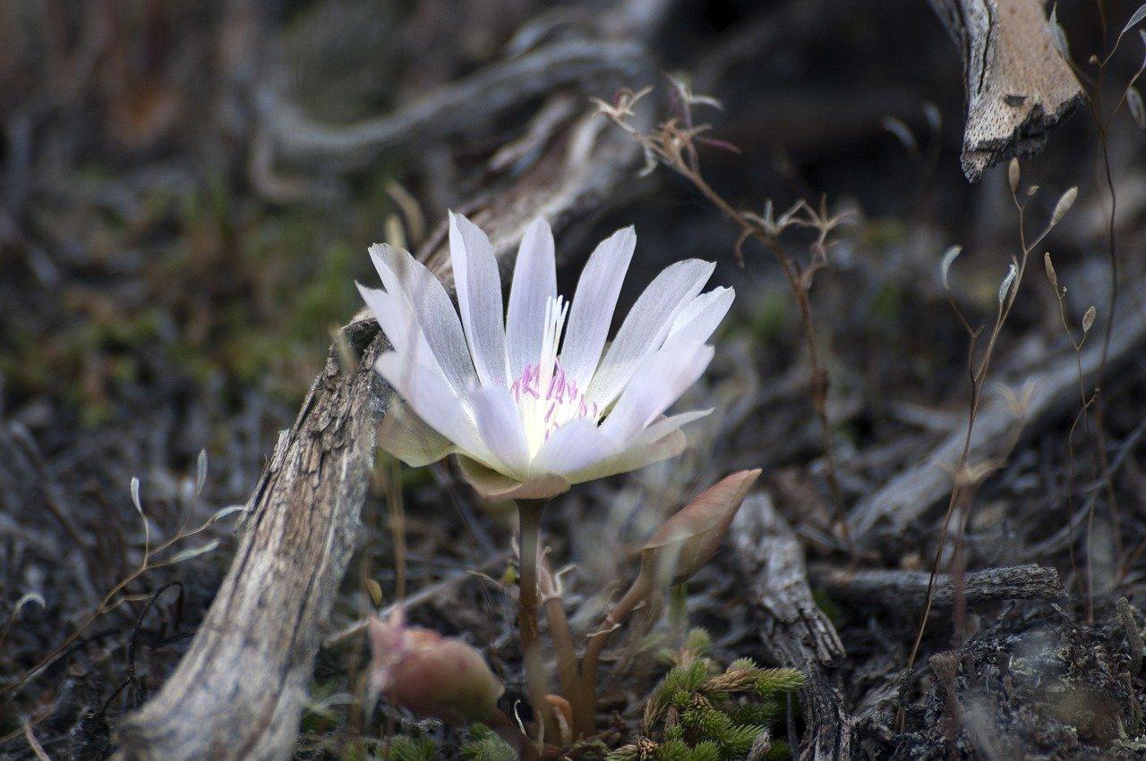 flower-2372997_1280