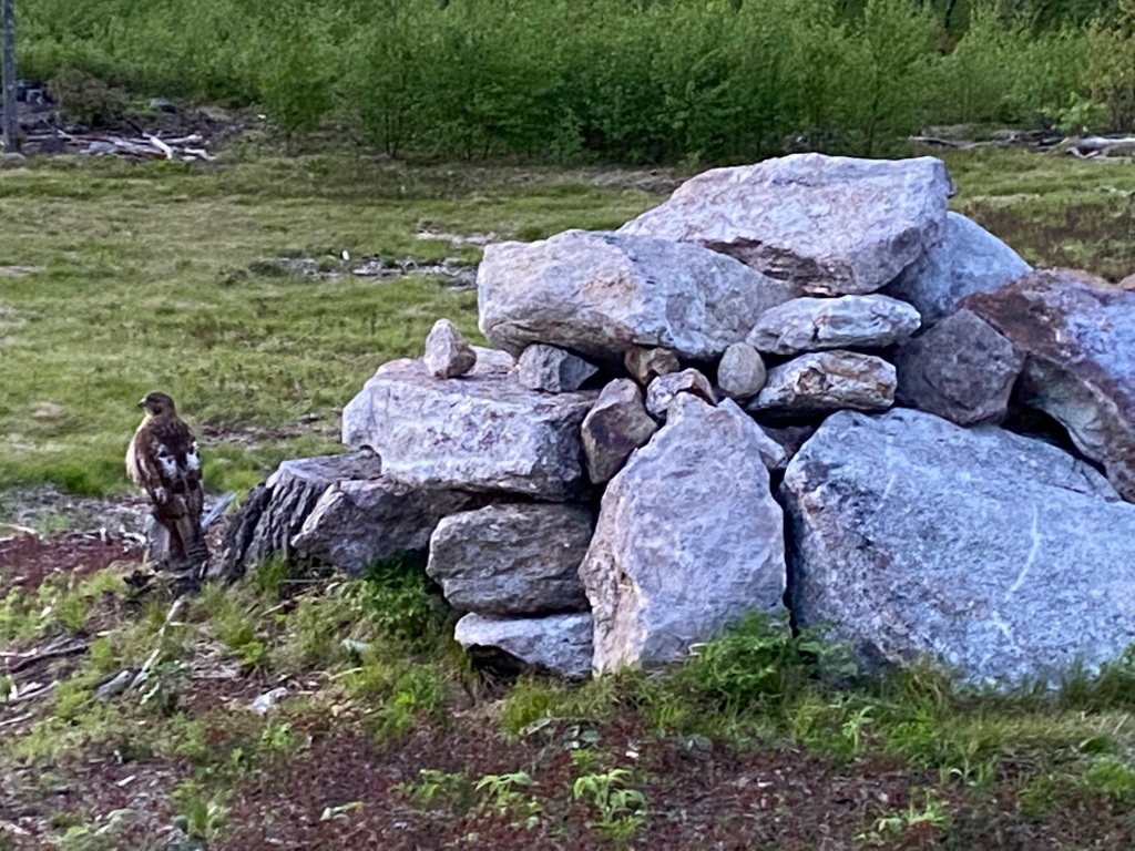 A hawk waits beside a pile of stone at sunset, guarding Earth's mysteries.